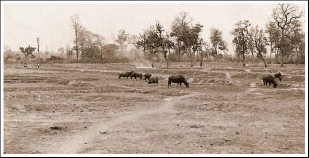 A landscape image of rice paddi in the Loeng Nok Tha area at the time Operation Crown started.